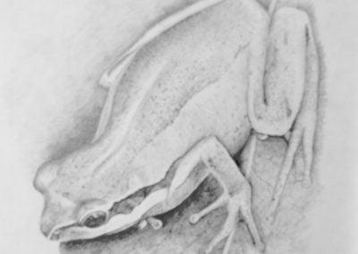 33 frogstudy